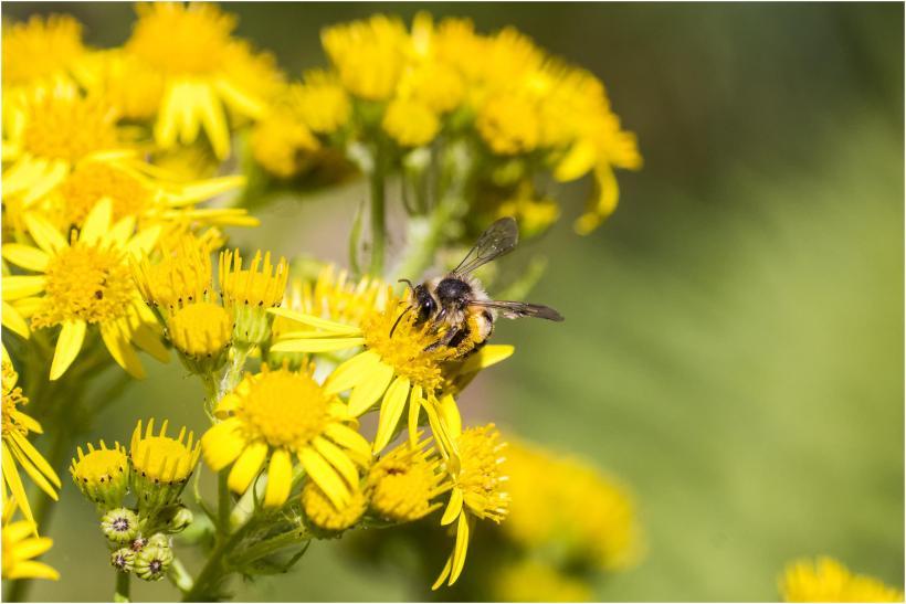 pollen-pants-img_8155_dxo-1